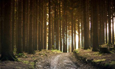 Paso 6 Hacia la Recuperación | El camino correcto hacia adelante