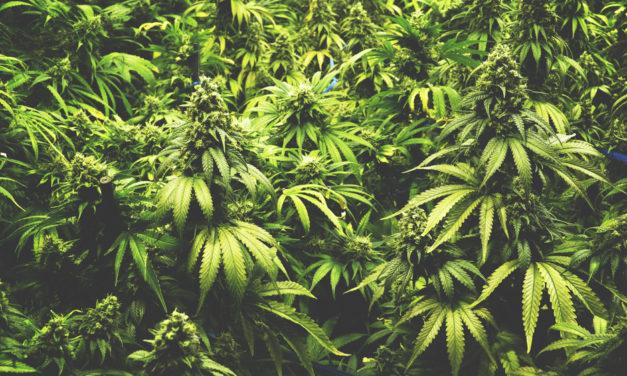 Is it OK to Smoke Marijuana?