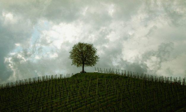 제자 양성 문화를위한 나무 건설